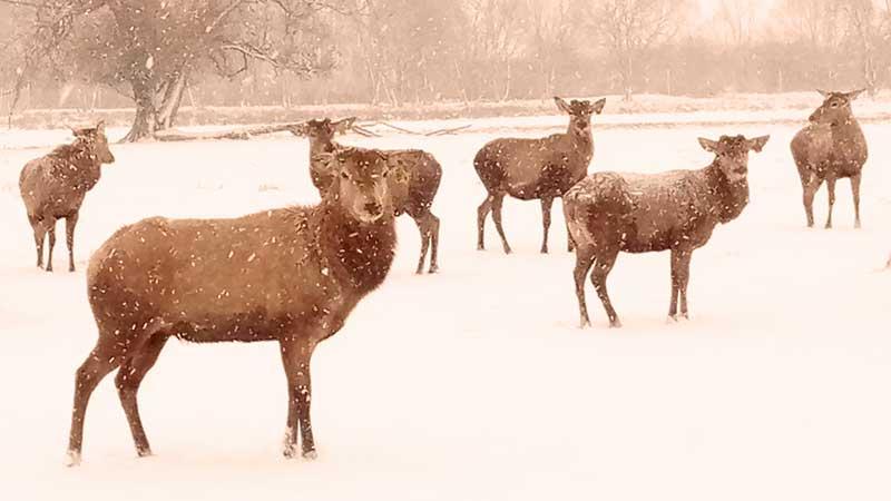 Зимнее путешествие Русского Оленя в поисках новой генетики. Deer Trophy Farm.